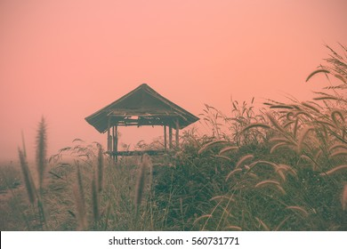 old dilapidated barn with grassland,foggy mood in the morning on the edge of cornfield,vintage tone concept