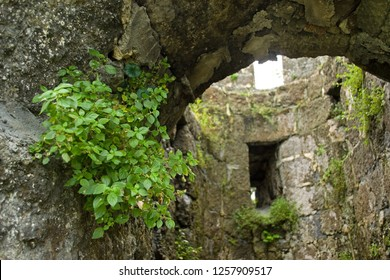 Old dilapidated fortress. Arched entrance to the tower with loopholes windows. Plants grow in the walls of structures in the cracks of the . Bright young greens on a background of gray stone