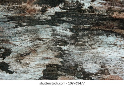 Old dirty bark with cracks and scratches