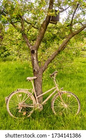 old dirty vintage bicycle leaning on tree trunk on green grass