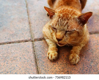 Old dirty yellow brown fur stray cat, turning face, closing tear staining eyes, opening mouth, moaning, as hurting feeling, lying on grainy tile red footpath floor, under warm evening sunlight