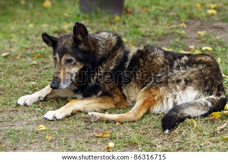 Old dog lying on the grass