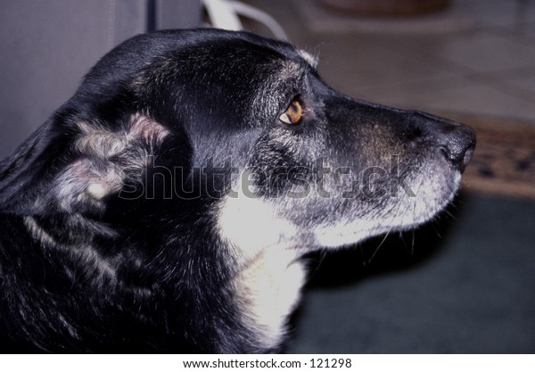 old dog profile