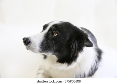 An old dog showing the side of his face