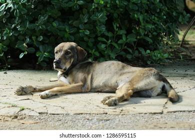 Old dogs sunbathing