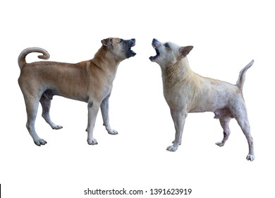 Old dogs were biting each other. White Blackground. With clipping path.