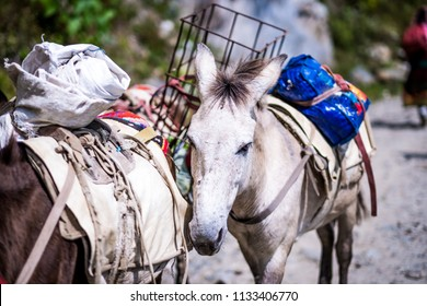 Old donkey carrying goods on the trail in Nepalese Himalayas