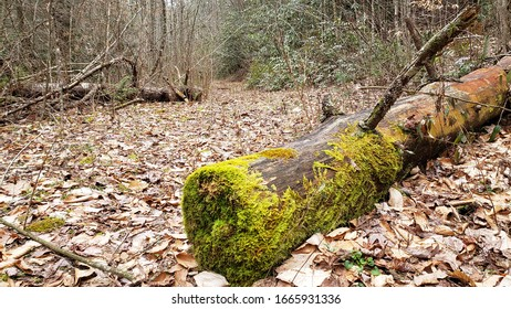 Old Downed Tree with Bright Green Moss