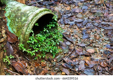 Old drain pipe with a plant growing in the opening