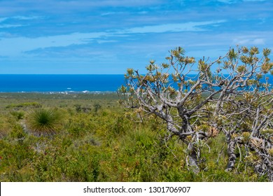 Old dry bush at Nilgen Nature Reserve at the coast of Western Australia