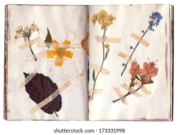 Old dry up flowers. Open book with herbarium pages. Vintage.