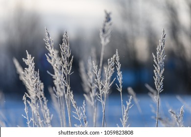 old dry grass bents in winter with shadows in snow and sunset blur in background