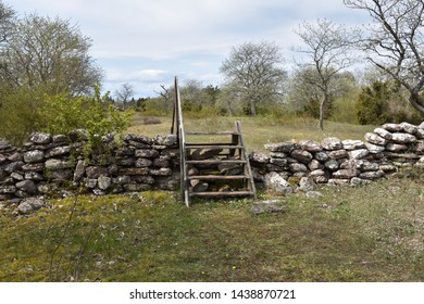Old dry stone wall with a wooden stile in a meadow by springtime at the island Oland in Sweden