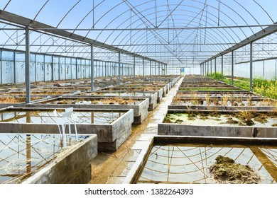 Old empty farm plant breeding greenhouse by the blue sky background, view inside