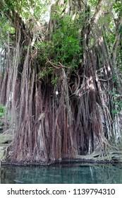 Old Enchanted Balete Tree, Siquijor Island, Philippines