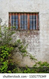 Old Facade window covered by plants