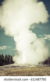 Old faithful on the morning,summer, in Yellowstone National park,usa.