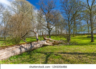 Old fallen tree snag in a meadow at spring