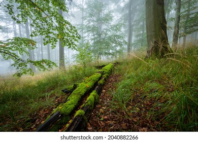 Old fallen treetrunk, covered with green moss. Scene from the deep forest.