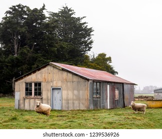 old farm barn in New Zealand with a couple of sheep in the foreground on a cloudy day.
