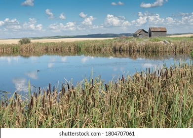 Old farm buildings beside a pond on the prairie near the town of Trochu, Alberta, Canada