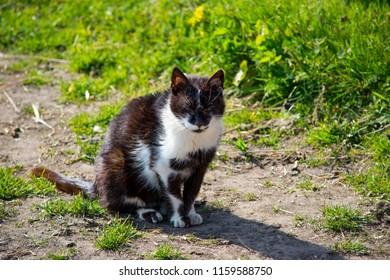Old Farm Cat