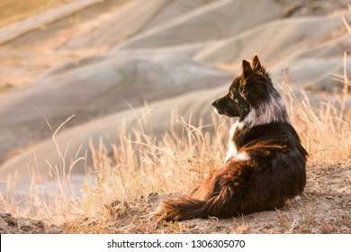 old farm dog laying on hillside