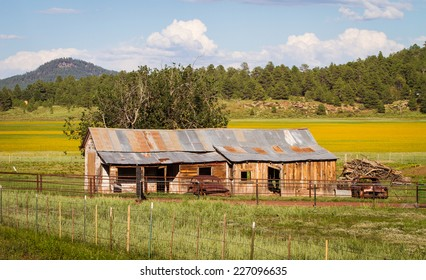 Old farm house, with rusty cars, in a meadow of wild daisies, in rural northern Arizona.