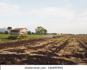 Old farmer is driving truck to prepare dryness cron maize wide field after burned land near old and poor wooden home before growing next crop concept agricultural, poor, el nino , cycle economy