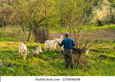 Goat and Forest Images, Stock Photos & Vectors | Shutterstock