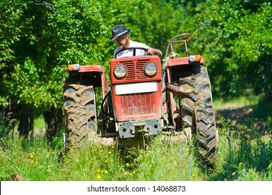 Old farmer plowing between trees in an orchard