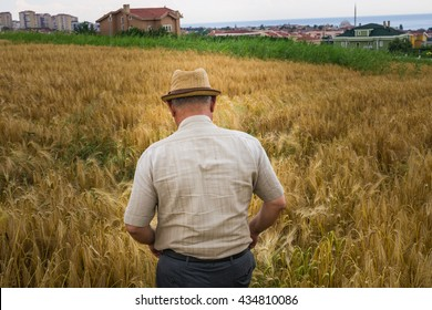 Old farmer walks toward the field