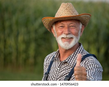 Old farmer with white beard showing thumb up as ok sign in corn field in summer