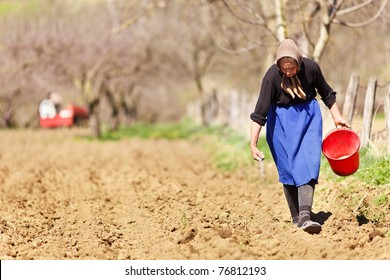 Old farmer woman sowing seeds mixed with fertilizer from a bucket