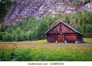 Old farmhouse and flowerfield with yellow flowers in Norway.
