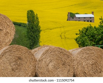 An old farmhouse sits in a yellow canola or rapeseed meadow with rolls of hay in Herefordshire, UK