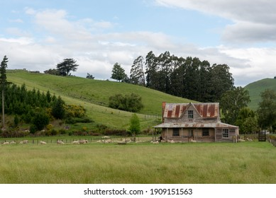 Old farmhouse surrounded by grassy hills and trees. Sheep in the field surrounding the house.