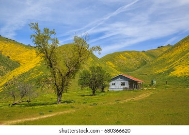 Old farmhouse and wildflowers near Carrizo National Monument in California, April 2017