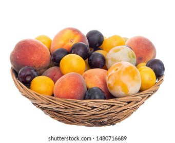 Old fashioned fruit from a long abandoned orchard in old wicker basket, bowl. Tiny plums, small, sweet peaches etc. Front view. Isolated.