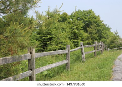 Old fence along the forest