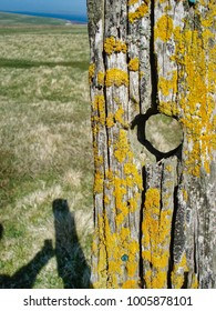 Old fence post in the sun