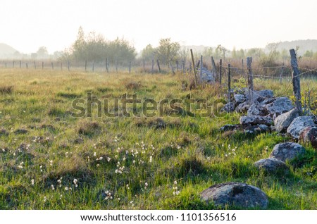 Old fence and stone wall in a beautiful grassland at the swedish island Oland