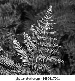 Old fern leaf up close