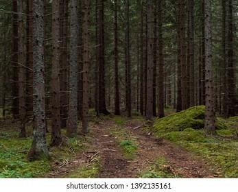 Old forest background in Sweden