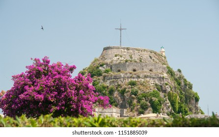 The Old Fortress in Corfu town with a nice bougainvillea, Corfu island, Greece
