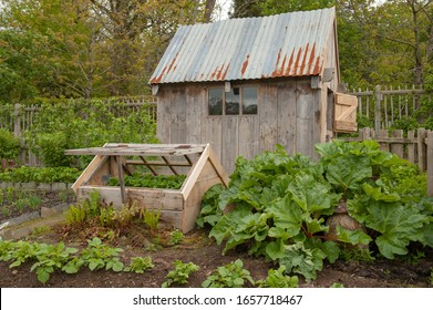 Old Garden Shed and Cold Frame on an Allotment with Home Grown Organic Rhubarb in a Vegetable Garden in Rural Devon, England, UK