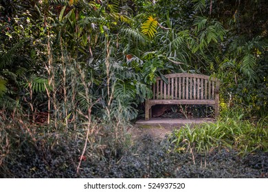 Old garden wooden bench surrounded by greens