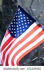 Old Glory in the woods