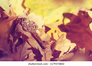 old gold key lost in autumn forest, lies in leaves, closeup, selective focus