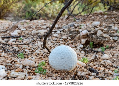 An old golf ball that is decomposing or falling apart in the harsh extremes of the Sonoran Desert. Rocks, bushes, and sand. Branches and new vegetation. Pima County, Tucson, Arizona. 2019.